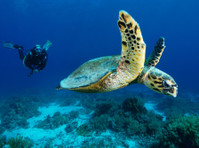 Camel Dive Club & Hotel (4) - Water Sports, Diving & Scuba