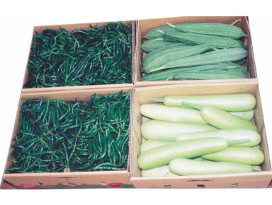 hosamgo vegetable - Import/Export