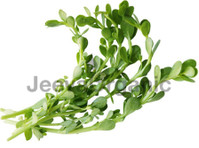 Jeeva Organic.com (2) - Organic food