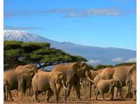 Diani Wilderness Tours and Safaris/logistics (1) - Reisebüros