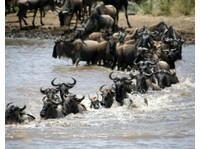 Diani Wilderness Tours and Safaris/logistics (3) - Reisebüros