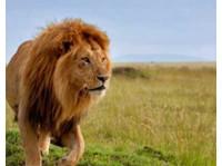 Diani Wilderness Tours and Safaris/logistics (6) - Reisebüros