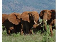 Diani Wilderness Tours and Safaris/logistics (7) - Reisebüros