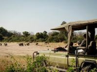 Cheetah Revolution Safaris (4) - Biura podróży