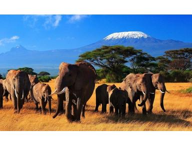Wildlife Safari Exploreans - Travel Agencies