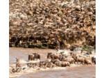 Wildlife Safari Exploreans (6) - Travel Agencies