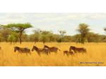 Wildlife Safari Exploreans (7) - Travel Agencies