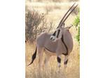 Wildlife Safari Exploreans (9) - Travel Agencies