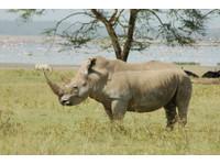 African Circuit Safaris & Tours (4) - Travel Agencies