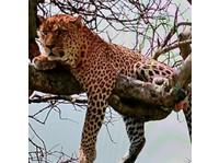 Africa Venture Safaris (1) - Travel Agencies