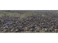 Africa Venture Safaris (6) - Travel Agencies