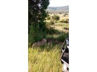 Africa Venture Safaris (7) - Travel Agencies