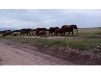 Africa Venture Safaris (8) - Travel Agencies