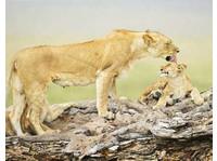 Wild Race Africa Safari Tours - African Safari Holidays Co. (2) - Travel Agencies