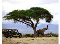 Wild Race Africa Safari Tours - African Safari Holidays Co. (4) - Travel Agencies