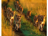 Siku Njema Tours and Safaris (1) - Travel Agencies