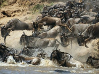 Adventure Safari Bookers (2) - Travel Agencies