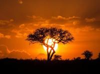 Adventure Safari Bookers (3) - Travel Agencies