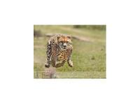 Adventure Safari Bookers (5) - Travel Agencies