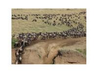 Adventure Safari Bookers (7) - Travel Agencies