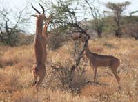 Africa Flash Mctours and Travel (4) - Biura podróży