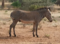 Kenya Tanzania Safari Tours & Budget Trips (1) - Biura podróży