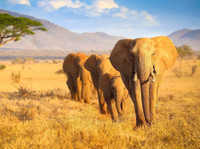 South Rift Galaxy Safaris (1) - Reisebüros