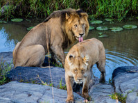 Kenya Expresso Tours and Safaris ltd (1) - Biura podróży