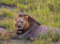 Kenya Expresso Tours and Safaris ltd (4) - Biura podróży