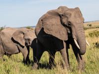 Kenya Expresso Tours and Safaris ltd (5) - Biura podróży