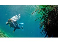 Koox Diving (1) - Water Sports, Diving & Scuba