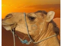 Morocco Tours The Best Tours in Morocco From Marrakech Fes (1) - Travel Agencies