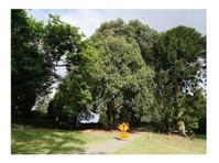Pro Climb Tree Care (1) - Gardeners & Landscaping