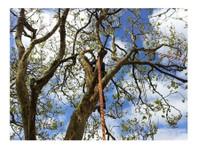 Pro Climb Tree Care (2) - Gardeners & Landscaping