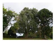 Pro Climb Tree Care (3) - Gardeners & Landscaping