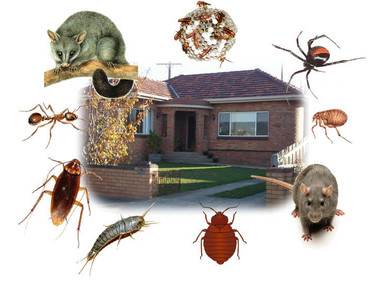 Friends Fumigation Services - Home & Garden Services