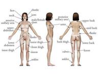 MySliM Beauty Salon - Non-surgical Ultrasound Liposuction (7) - Wellness & Beauty