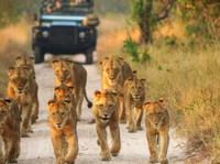 Kruger Wildlife Safaris (2) - Travel sites