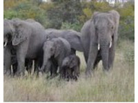 Kruger Park Trips (1) - Travel sites