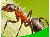 Pretoria Pest Control (1) - Home & Garden Services