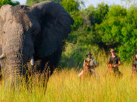 Jewel of Africa Safari tour (1) - Travel sites