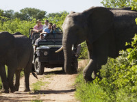 Jewel of Africa Safari tour (2) - Travel sites