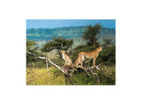 Serengeti National Park (3) - Travel sites