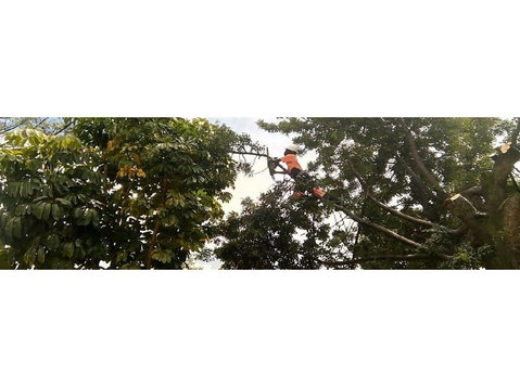 Tree Felling Group - Gardeners & Landscaping