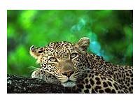 African Pathfinder (5) - Travel Agencies