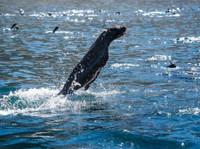 Snorkel With Seals (1) - Travel Agencies