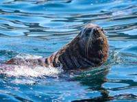 Snorkel With Seals (2) - Travel Agencies