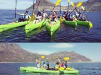 Snorkel With Seals (3) - Travel Agencies