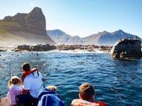 Snorkel With Seals (4) - Travel Agencies