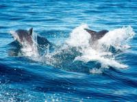 Snorkel With Seals (5) - Travel Agencies
